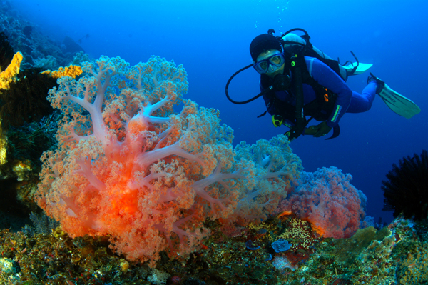 pulau_luxury_charters_diving_amed